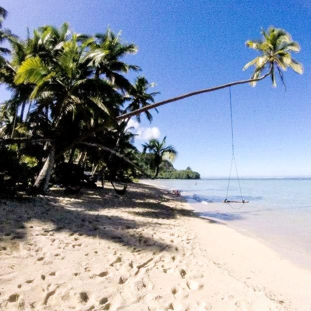 Fiji beach house beach with palm tree swing